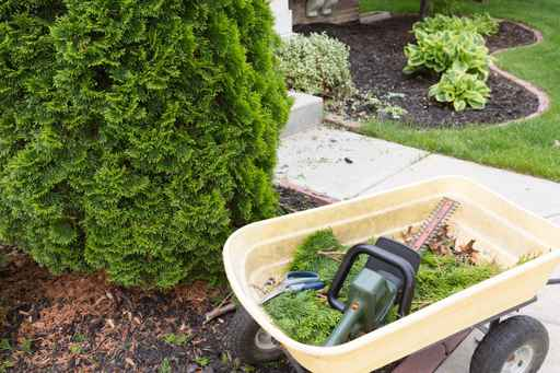 Garden tools used to trim arborvitaes